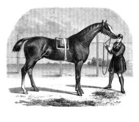 Cheval pur-sang