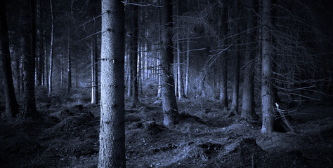 Foto op Canvas Bos Spooky forest