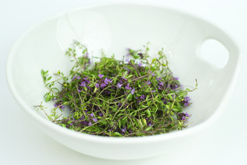 Herbal medicine,forest thyme on white bowl