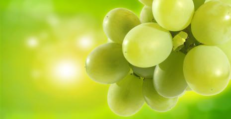 sun and wine