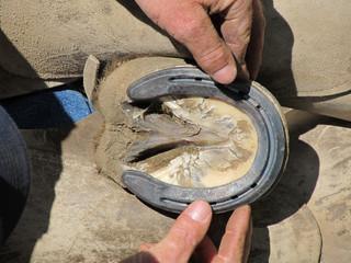 Fitting the Horseshoe