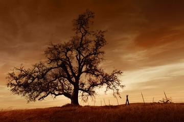 Bare Oak Tree at Sunset