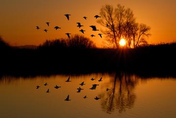 Evening Ducks