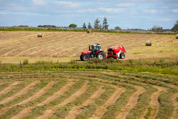 Wall Mural - tractor collecting haystack in the field