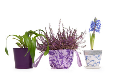 Three flower pots - Lavender, Hyacinth and Cattleya Orchid