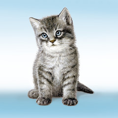 graues Kätzchen, Illustration