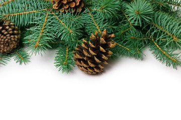 Pine cones and fir-tree
