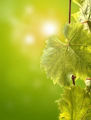 leaf in sun light