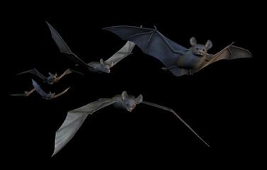 Bats Flying - on Black