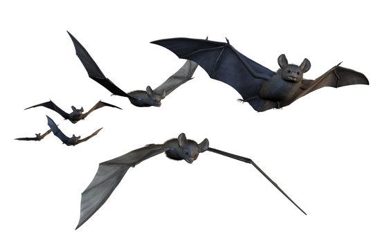 Bats Flying - on White