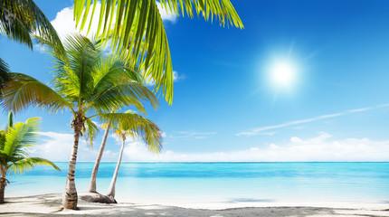 Caribbean sea and coconut palms