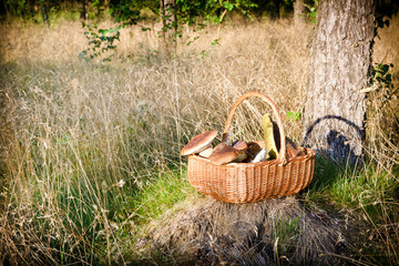 Basket with mushrooms in forest