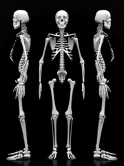 image of a white, a human skeleton on a black background