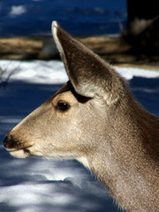 Profile of a Doe