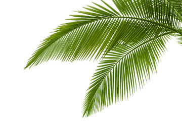 Foto auf Leinwand Palms Palm leaves