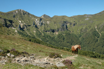 crêtes de la vallée de Chaudefour et cheval