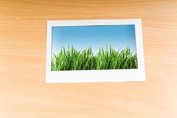Green grass on the photo frame