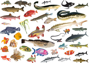 large set of isolated color fishes