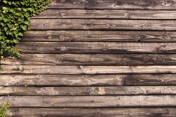 Mur en bois et lierre Fotobehang