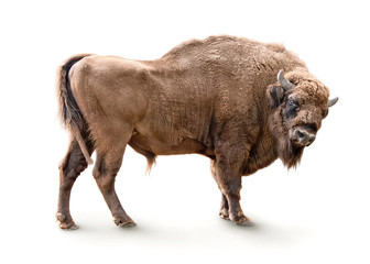 Printed roller blinds Bison european bison isolated on white background