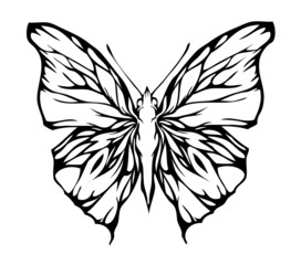 Nice airy butterfly