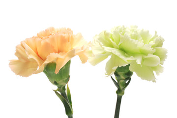 Orange and green Carnations isolated on white background