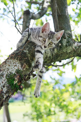 Junge Katze auf Baum