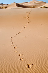 Morocco, Merzouga, footprints on the dunes of the desert