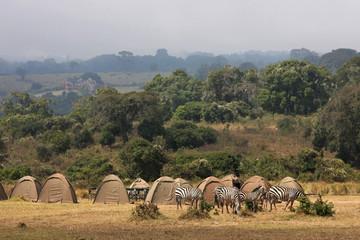 Des zebres au camping