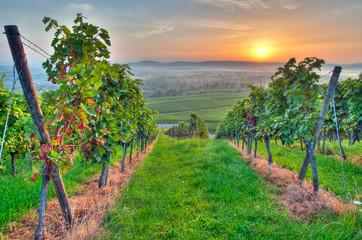 Fototapete - Sonne und Sommer im Weinberg