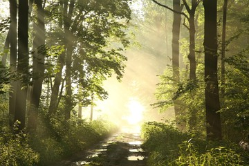 Keuken foto achterwand Bos in mist Forest path on a misty spring morning just after the rain