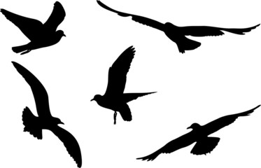 Set of silhouettes of seagulls