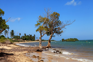 Tropical African beach with typical village
