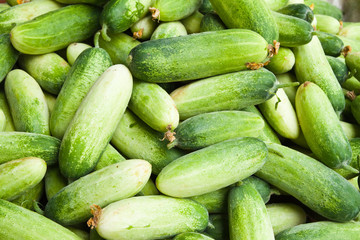Pile of cucumber in fresh market , asian style vegetable , close