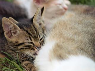 kittens suckle
