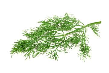 fennel branch