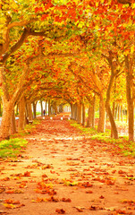 Nice pathway at autumn
