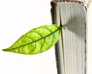 Book with a green leaf