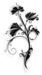 Ranke, flora, Blumen, Blüten, schwarz, grau