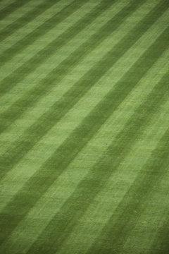 Fresh Outfield Grass