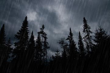 Foto op Canvas Onweer Rainstorm in forest