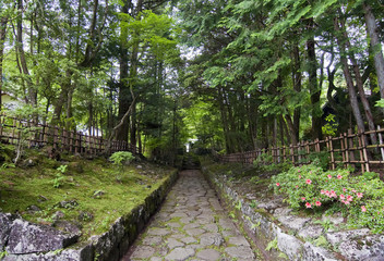 Camino en el bosque