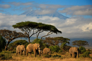 Deurstickers Olifant Elephant family in front of Mt. Kilimanjaro