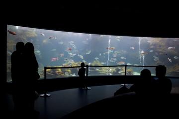 Visitors at the aquarium silhouette