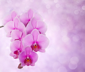 pink orchid on defocused background