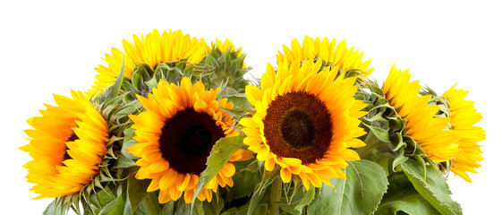 Bouquet of sunflowers over white background