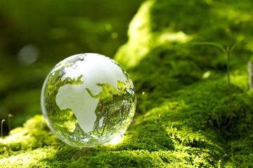 森、地球儀