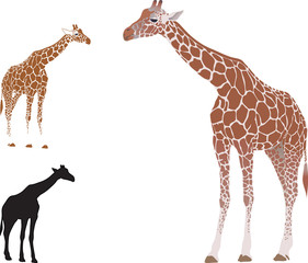 Vector isolated realistic giraffe