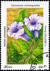 AFGHANISTAN - CIRCA 1985 Clytostoma