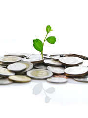 Green plant on coins